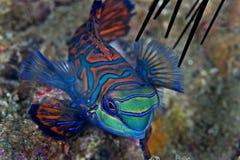 Pesci piccoli d alimentazione foto stock 87 pesci for Cibo per pesci tropicali