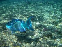 Pesci del Mar Rosso Fotografia Stock