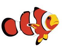 Pesci del pagliaccio Immagini Stock Libere da Diritti