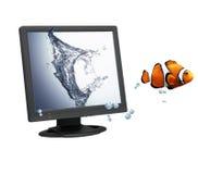 Pesci del pagliaccio e video del calcolatore Fotografie Stock