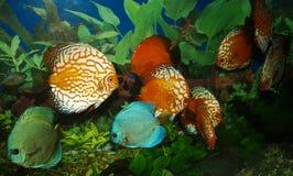 Pesci dell'acquario fotografie stock libere da diritti