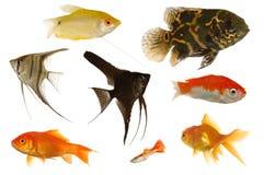 Pesci dell'acquario immagine stock libera da diritti