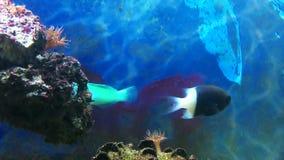 Pesci dell'acquario che fanno galleggiare primo piano video d archivio