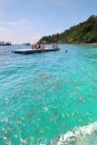 Pesci dell'oceano alla spiaggia di corallo Fotografia Stock