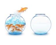 Pesci dell'oro che saltano per svuotare ciotola Fotografia Stock