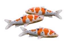 Pesci della carpa isolati su priorità bassa bianca Fotografia Stock