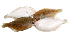 Pesci della passera Fotografia Stock Libera da Diritti