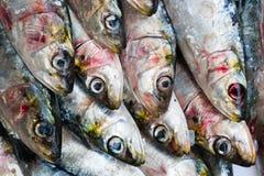 Pesci della sardina Fotografie Stock