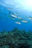 Pesci della scogliera di Murials Fotografia Stock