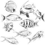 Pesci della scogliera messi illustrazione vettoriale