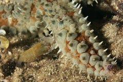 Pesci della stella & del gambero Fotografia Stock
