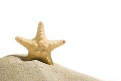 Pesci della stella con il percorso di residuo della potatura meccanica Fotografia Stock