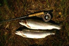 pesci della trota Fotografia Stock Libera da Diritti