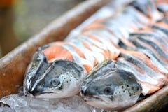 Pesci di color salmone Fotografia Stock