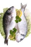 Pesci di Dorada immagine stock libera da diritti