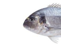 Pesci di Dorado Immagine Stock