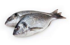 Pesci di Dorado isolati su bianco Immagini Stock Libere da Diritti