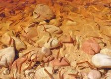 Pesci di Littles Fotografie Stock Libere da Diritti