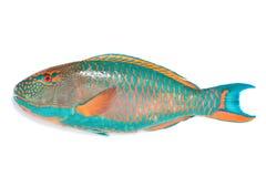 Pesci di mare Fotografie Stock