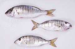 Pesci di mare freschi Fotografia Stock