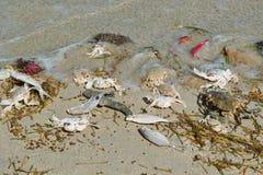 Pesci di mare guasti, granchi, erba Immagini Stock