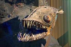 Pesci di mare profondo Immagini Stock Libere da Diritti