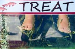 Pesci di medico che puliscono i piedi di un bagnante fotografia stock libera da diritti