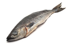 Pesci di merluzzo Fotografie Stock Libere da Diritti