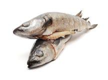 Pesci di merluzzo Fotografia Stock