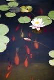 Pesci di nuoto Immagine Stock