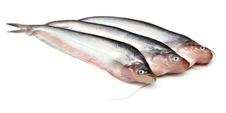 Pesci di Pabda Fotografia Stock Libera da Diritti