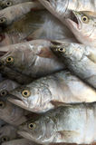 Pesci di Pompanoes catched con un a rete Immagine Stock