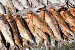 Pesci di riserva Fotografia Stock Libera da Diritti