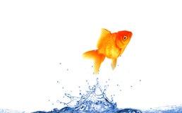 Pesci di salto fotografia stock