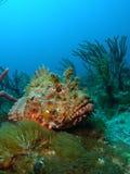 Pesci di scorpione Immagine Stock Libera da Diritti