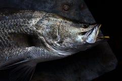Pesci di Siver Immagini Stock