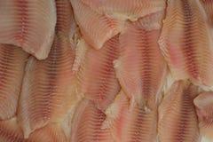 Pesci di tilapia Fotografie Stock