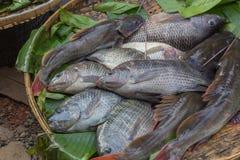 Pesci di tilapia al mercato Immagini Stock