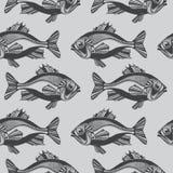Pesci di vettore, oceano Fotografia Stock Libera da Diritti