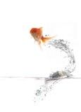 Pesci di volo Fotografia Stock Libera da Diritti