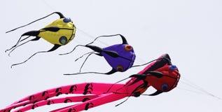 Pesci di volo del cervo volante Fotografia Stock