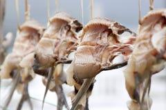 Pesci di volo secchi Immagini Stock