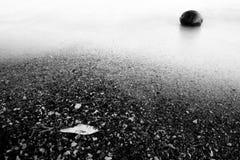 Pesci e noce di cocco guasti sulla spiaggia Fotografie Stock Libere da Diritti