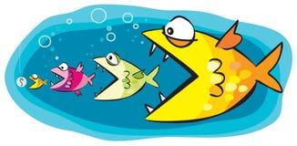 Pesci ed esca Immagini Stock