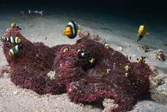 Pesci egualmente Fotografia Stock Libera da Diritti