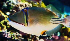 Pesci esotici Fotografia Stock