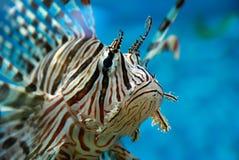 Pesci esotici Immagine Stock Libera da Diritti