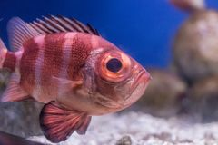 Pesci esotici in acquario Fotografie Stock