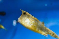 Pesci esotici in acquario Immagini Stock Libere da Diritti