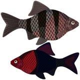 Pesci esotici dell'acquario Fotografia Stock Libera da Diritti